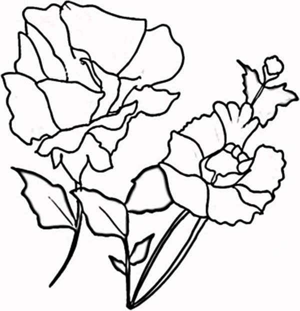 Poppy, : Blooming Red Poppy Coloring Page