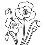Poppy, Blossom Poppy Flower Coloring Page: Blossom Poppy Flower Coloring Page