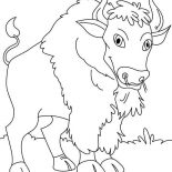 Bison, Canadian Bison Picture Coloring Page: Canadian Bison Picture Coloring Page