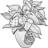 Poinsettia, Christmas Poinsettia Coloring Page: Christmas Poinsettia Coloring Page