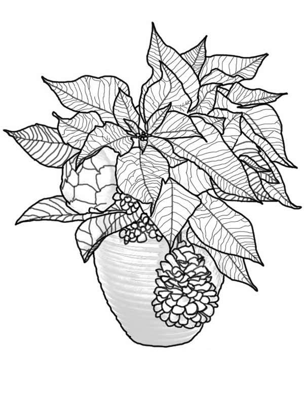 Poinsettia, : Christmas Poinsettia Coloring Page