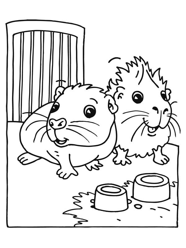 Guinea Pig, : Cute Baby Guinea Pig Coloring Page