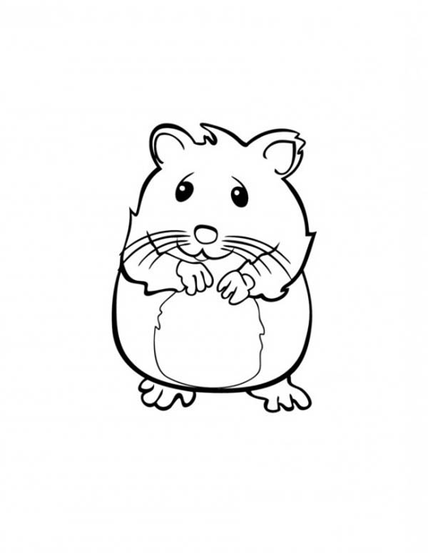 Guinea Pig, : Cute Hamster in Guinea Pig Coloring Page