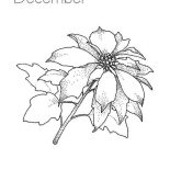 Poinsettia, December Poinsettia Coloring Page: December Poinsettia Coloring Page