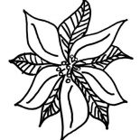 Poinsettia, Drawing Of Poinsettia Coloring Page: Drawing of Poinsettia Coloring Page