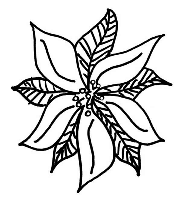 Poinsettia, : Drawing of Poinsettia Coloring Page