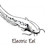 Eel, Electric Eel Image Coloring Page: Electric Eel Image Coloring Page