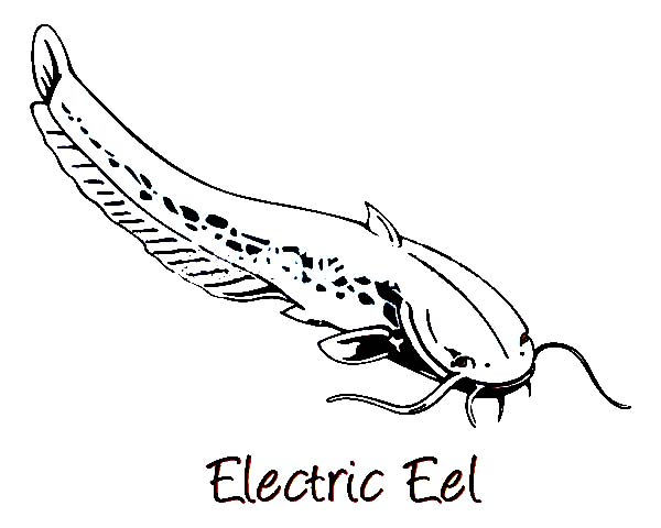 Eel, : Electric Eel Image Coloring Page