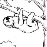 Sloth, Endangered Species Sloth Coloring Page: Endangered Species Sloth Coloring Page