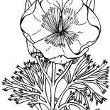 Poppy, Eschscholzia California Poppy Coloring Page: Eschscholzia California Poppy Coloring Page