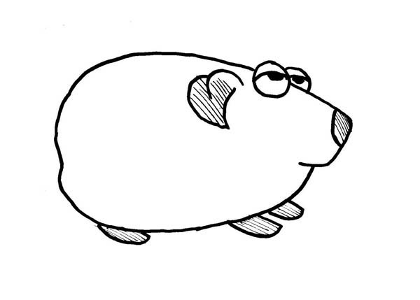 Guinea Pig, : Fat Guinea Pig Coloring Page