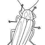 Firefly, Firefly Image Coloring Page: Firefly Image Coloring Page
