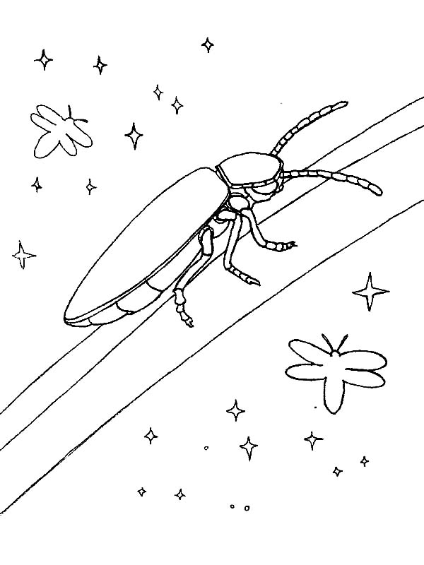 Firefly, : Firefly Shining in the Night Coloring Page