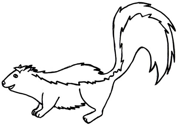 Skunk, : Friendly Skunk Coloring Page