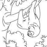 Sloth, Funny Animal Sloth Coloring Page: Funny Animal Sloth Coloring Page