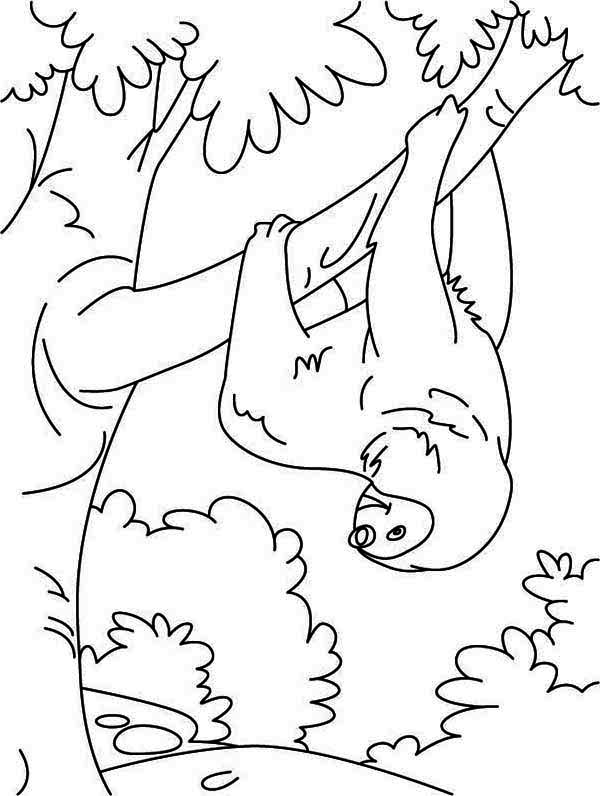 Sloth, : Funny Animal Sloth Coloring Page