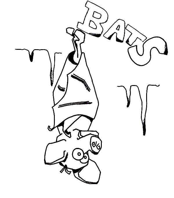 Bats, : Funny Bats Coloring Page