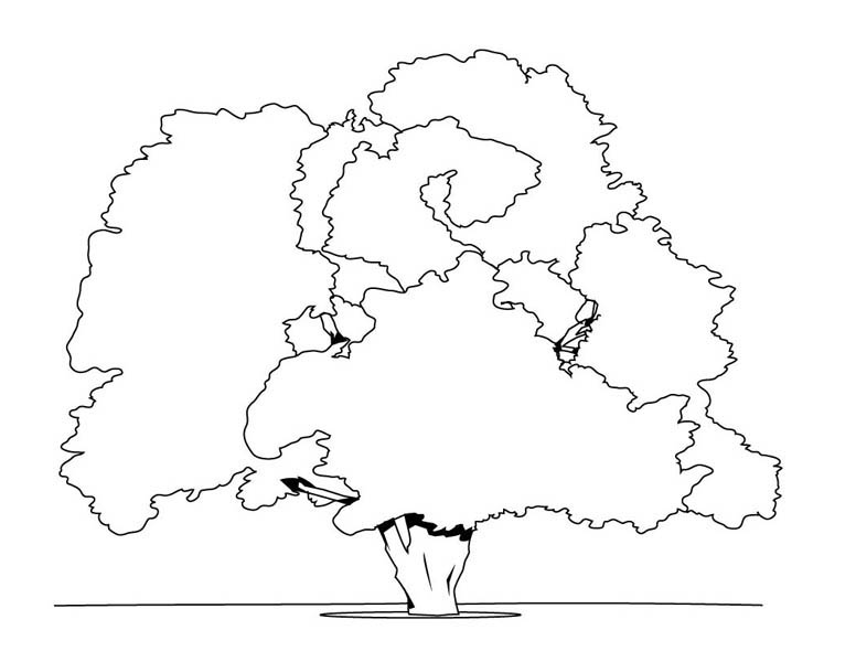 Oak Tree, : Giant Oak Tree Coloring Page