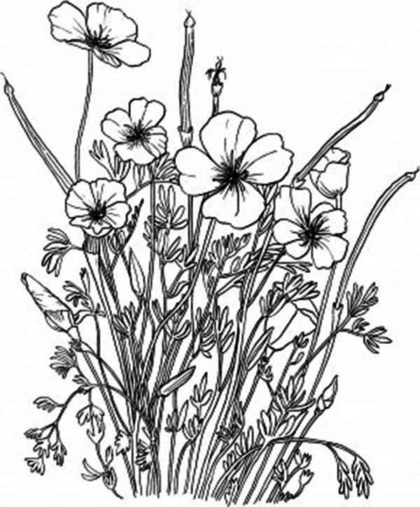 Poppy, : Golden Poppy in the Backyard Coloring Page