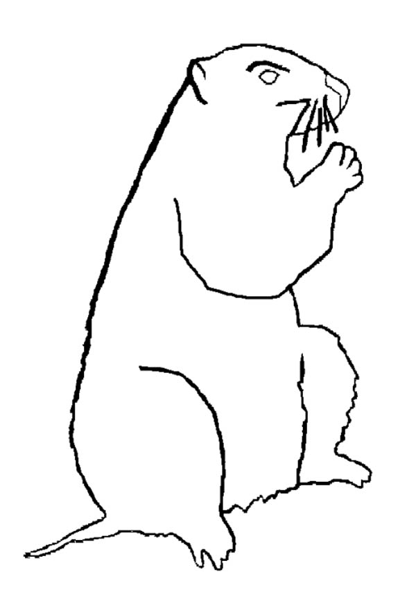 Guinea Pig, : Groundhog in Guinea Pig Coloring Page