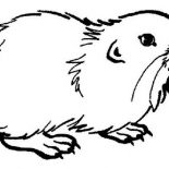 Guinea Pig, Guinea Pig Coloring Page: Guinea Pig Coloring Page