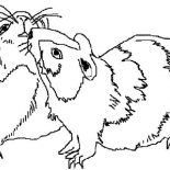 Guinea Pig, Guinea Pig Mating Coloring Page: Guinea Pig Mating Coloring Page