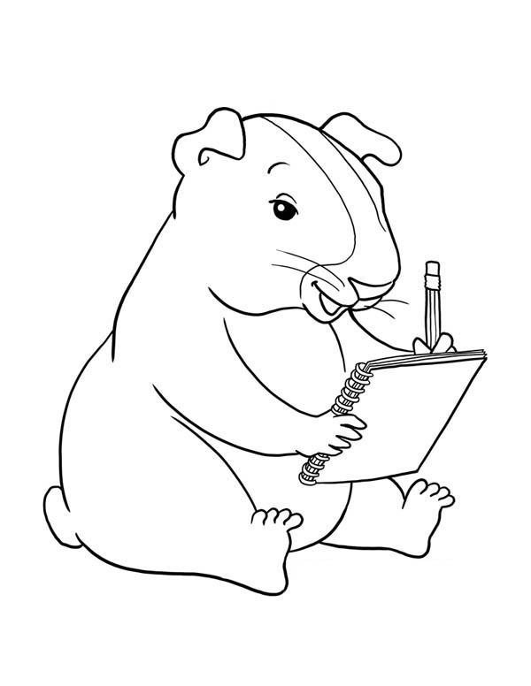 Днем рождения, картинки морская свинка раскраски