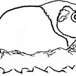 Guinea Pig, Guinea Pig With Straw Coloring Page: Guinea Pig with Straw Coloring Page