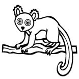 Lemur, Hairy Eared Lemur Coloring Page: Hairy Eared Lemur Coloring Page