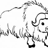 Bison, Hairy Male Bison Coloring Page: Hairy Male Bison Coloring Page
