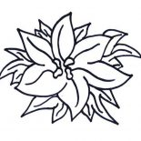 Poinsettia, Happy New Year Poinsettia Coloring Page: Happy New Year Poinsettia Coloring Page