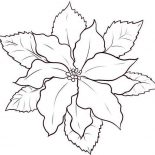 Poinsettia, How To Draw Poinsettia Coloring Page: How to Draw Poinsettia Coloring Page