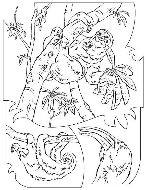 Sloth, : Hungry Sloth Finding Food Coloring Page