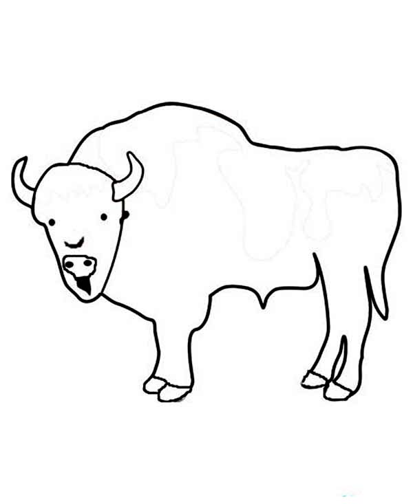Bison, : Kids Drawing of a Bison Coloring Page