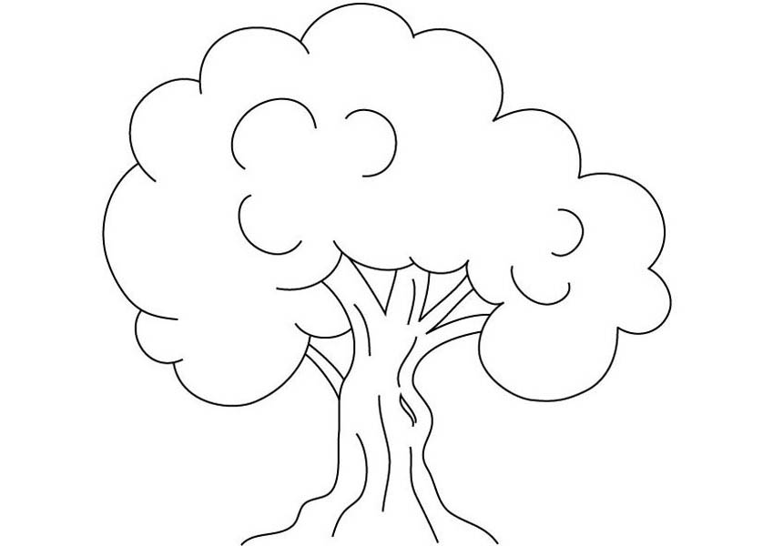 Oak Tree, : Kids Drawing of an Oak Tree Coloring Page