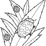 Lady Bug, Lady Bug Eating Leaves Coloring Page: Lady Bug Eating Leaves Coloring Page