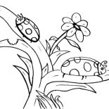 Lady Bug, Lady Bug Find His Mate Coloring Page: Lady Bug Find His Mate Coloring Page
