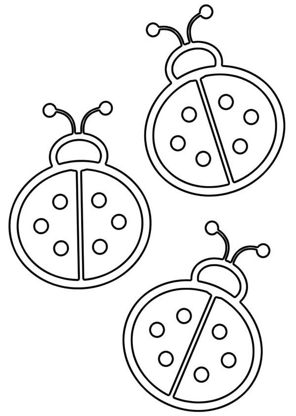 Lady Bug, : Lady Bug Outline Coloring Page