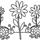 Lady Bug, Lady Bug And Sun Flower Coloring Page: Lady Bug and Sun Flower Coloring Page