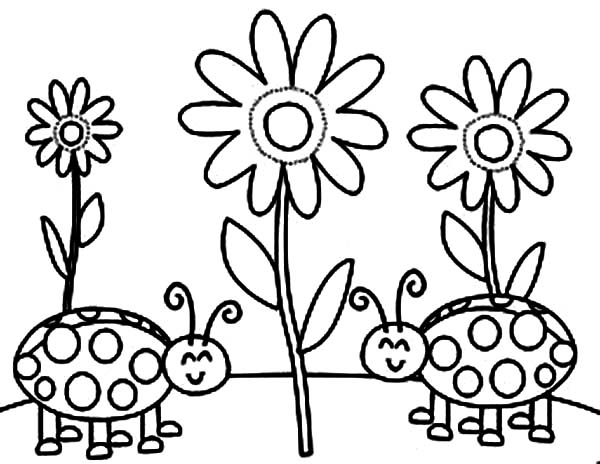 Lady Bug, : Lady Bug and Sun Flower Coloring Page
