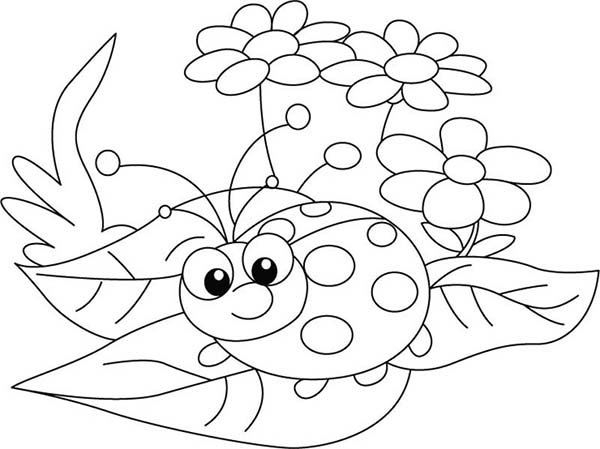 Lady Bug, : Lady Bug and Three Beautiful Flower Coloring Page