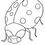 Lady Bug, Lady Bug Is Angry Coloring Page: Lady Bug is Angry Coloring Page
