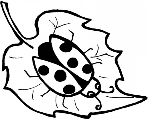 Lady Bug, : Lady Bug on Maple Leaf Coloring Page