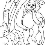 Sloth, Lazy Animal Sloth Coloring Page: Lazy Animal Sloth Coloring Page
