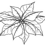 Poinsettia, Leaves Of Poinsettia Coloring Page: Leaves of Poinsettia Coloring Page