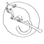Lemur, Lemur Awake In The Night Coloring Page: Lemur Awake in the Night Coloring Page