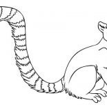 Lemur, Little Ring Tailed Lemur Coloring Page: Little Ring Tailed Lemur Coloring Page