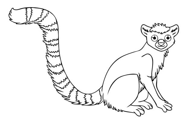Lemur, : Little Ring Tailed Lemur Coloring Page