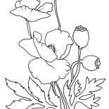 Poppy, Lovely Poppy Drawing Coloring Page: Lovely Poppy Drawing Coloring Page