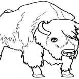 Bison, Male Bison Picture Coloring Page: Male Bison Picture Coloring Page